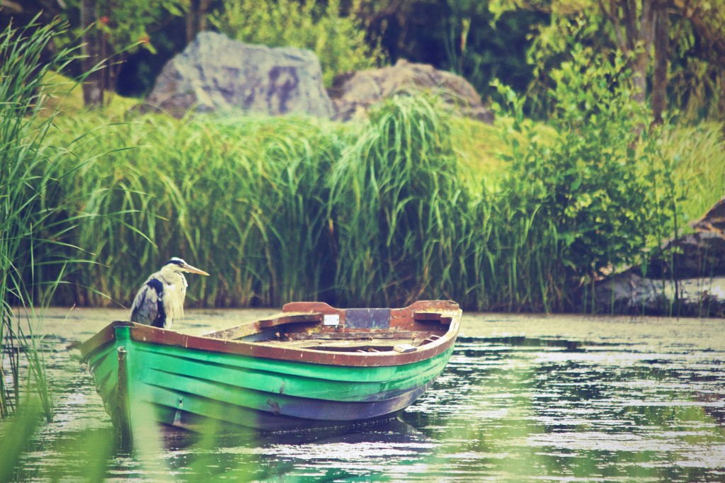 heron-in-a-boat